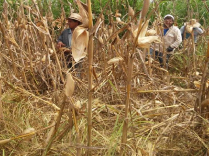 Solicitan declaratoria de emergencia para Tuxpan, por sequía