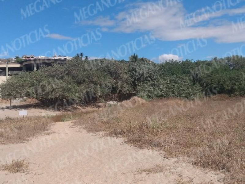 Solicitan recursos para la conservación de manglares
