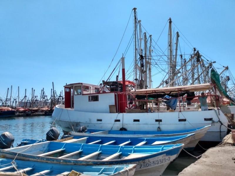 Sólo el 45% de embarcaciones mayores saldrán al camarón