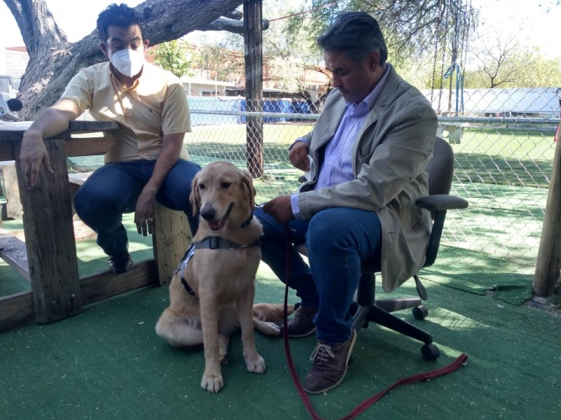 Son entrenados diez perros para detectar COVID-19 en las personas
