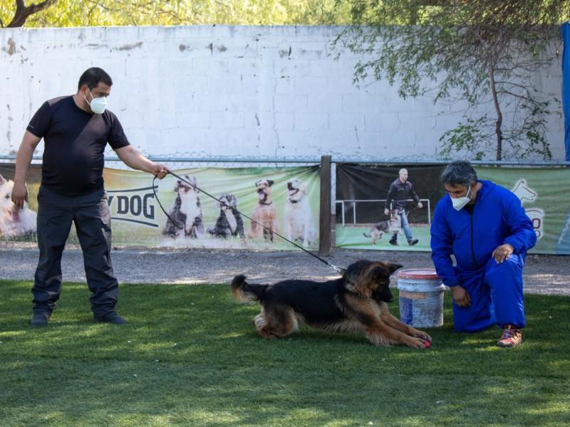 Sonora contará con perros que detectan el coronavirus