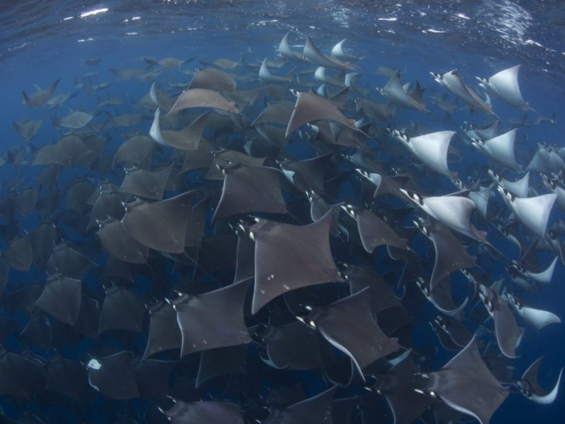 Sorprendentes imágenes de la vida marina