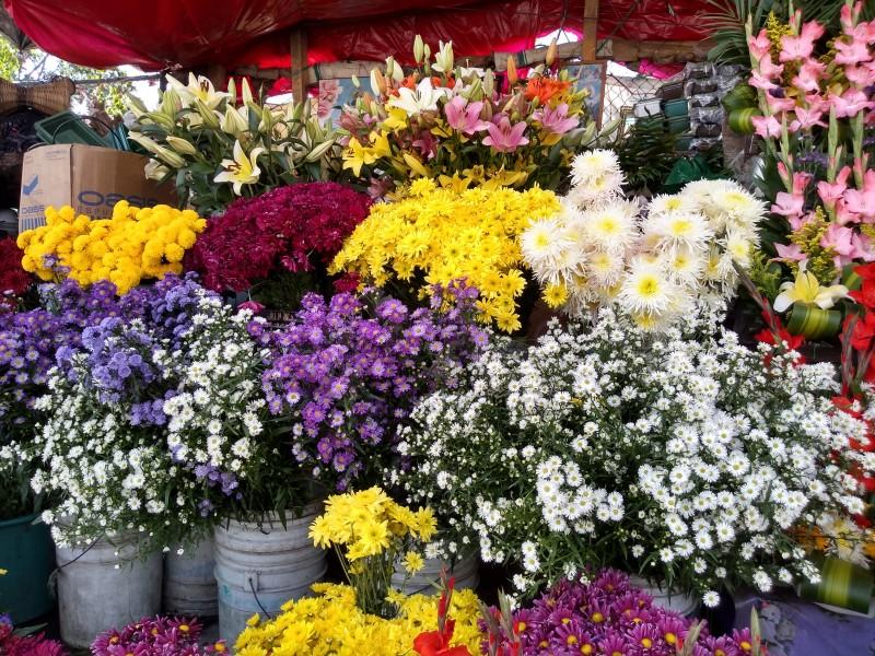 Sube el precio de las flores afirman vendedores