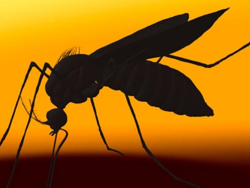Suman 15 víctimas fatales del dengue en Veracruz