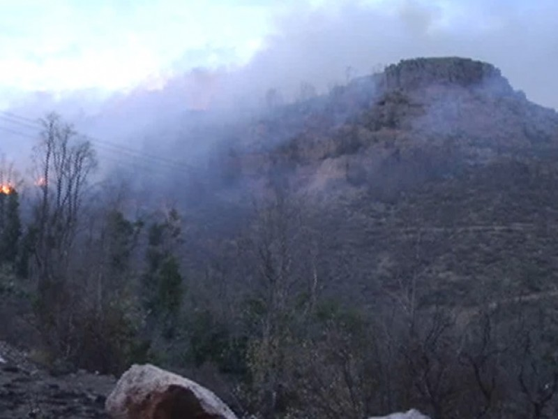 Suman 203 incendios forestales en el estado