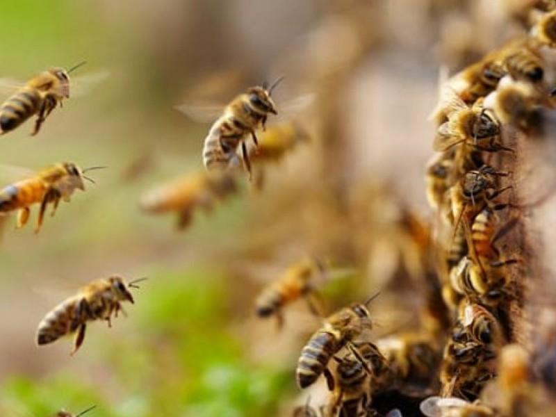Suman esfuerzos para rescatar abejas en La Laguna