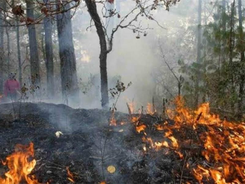 Superficie siniestrada por incendios forestales en 2021, mayor al 2020