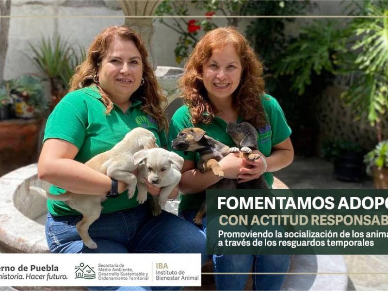TAC ofrece en adopción perritos del socavón de Zacatepec