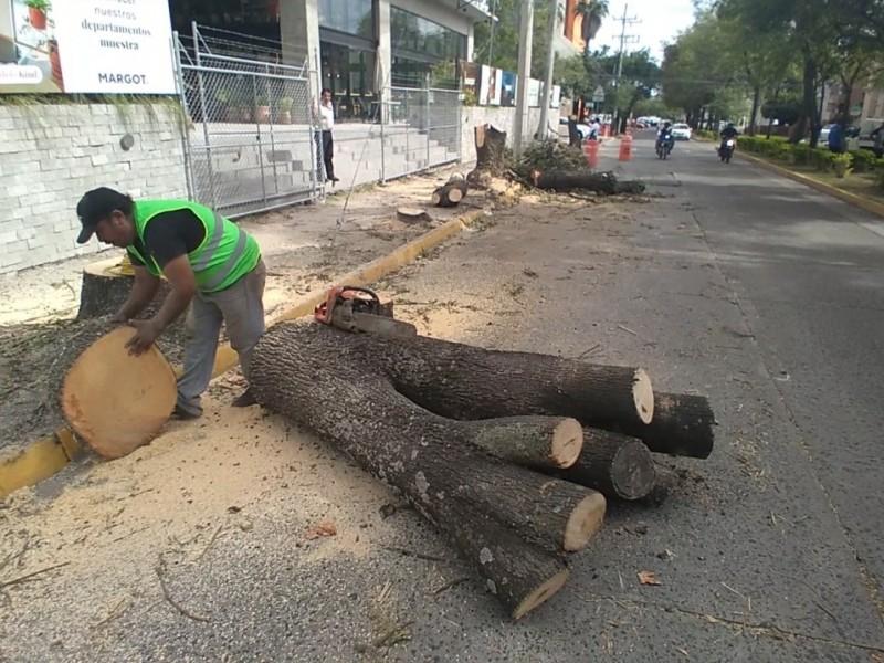 Talan 17 árboles junto a torre en construcción en Chapalita