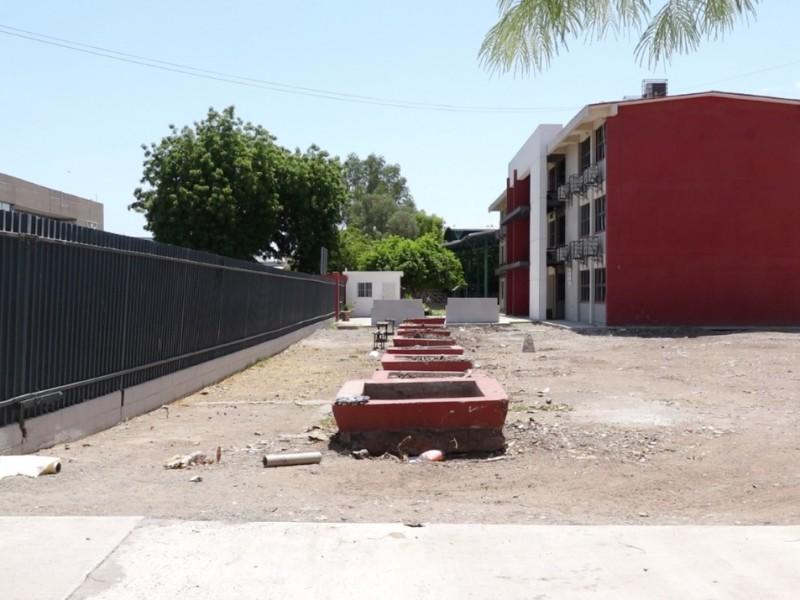Talan 8 grandes árboles Yucatecos dentro de la escuela Campoy