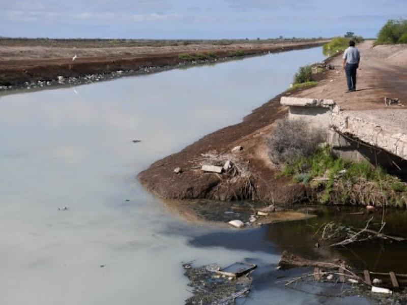 Taponamiento de dren Juárez afecta terrenos agrícolas
