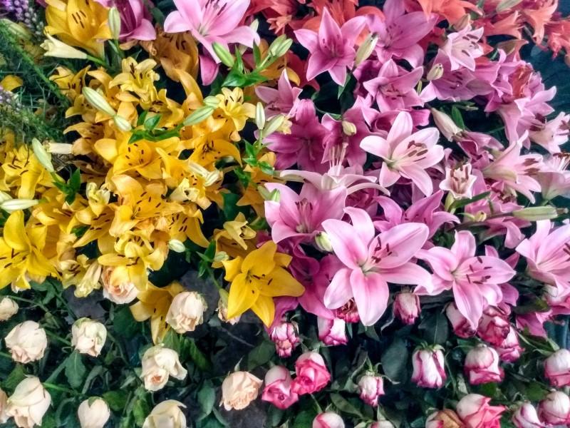 Tenancingo el paraíso de las flores.