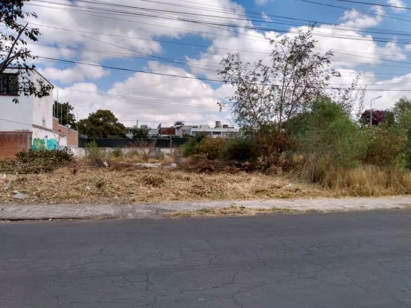 Terreno baldío alberga maleza y delincuencia en colonia Gabriel Pastor