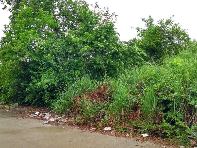 Terrenos con maleza utilizados como basureros