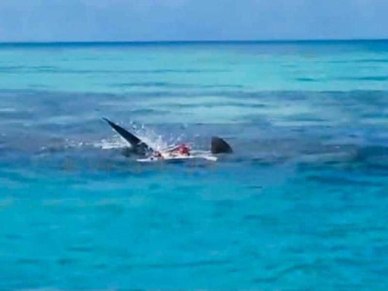 Tiburones devoran un cuerpo en Arrecife Alacrán, Yucatán