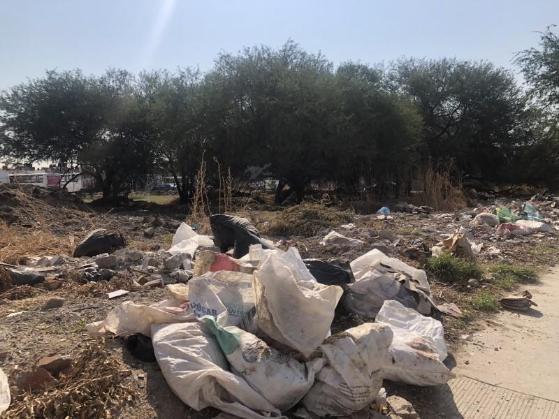 Tira de basura genera plaga en La Moreña