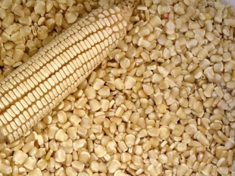 Tonelada de maíz alcanza los 6 mil 159 pesos