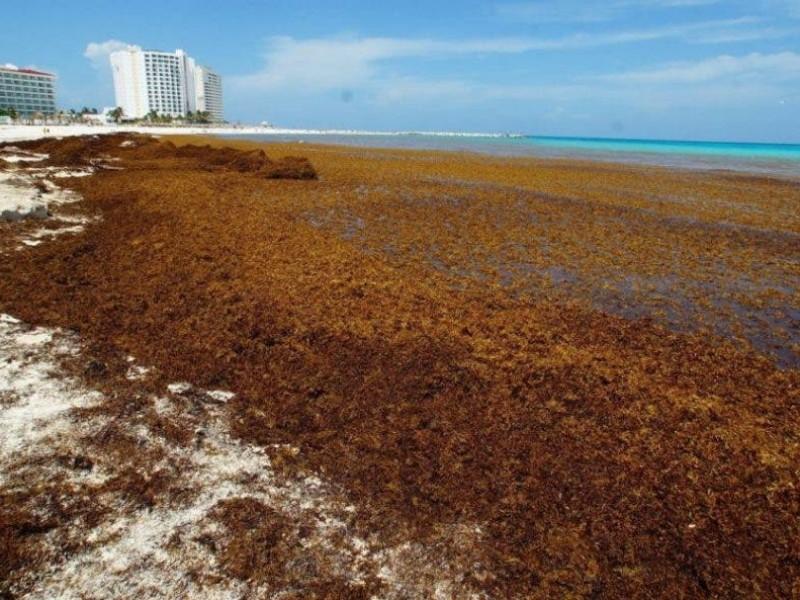 Toneladas de sargazo invaden playas de Quintana Roo