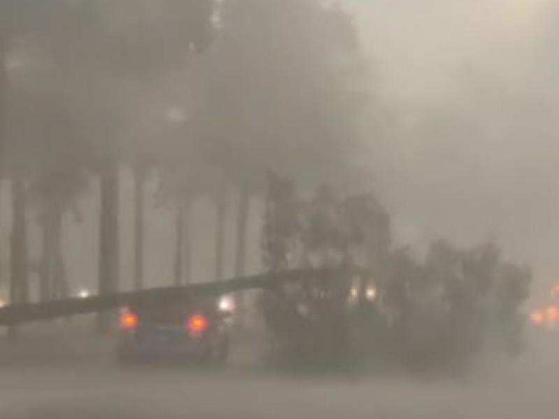 Tormenta vespertina azota a Guadalajara; árboles y postes caídos