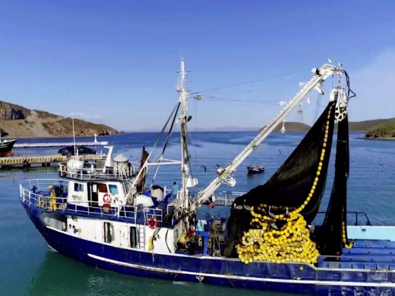 Trabaja flota sardinera y plantas al 100%