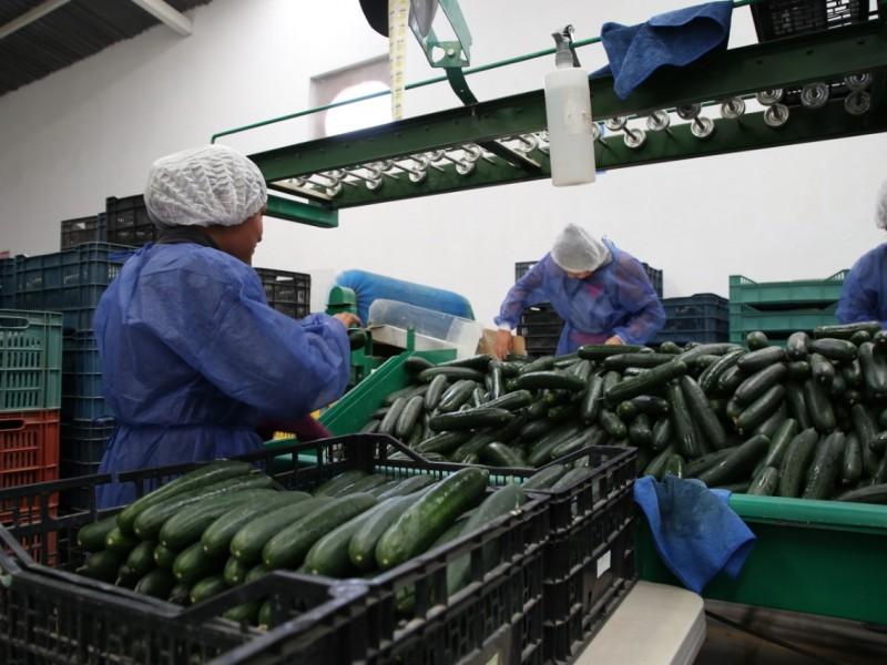 Trabajadores asegurados del sector primario aumentan a pesar de pandemia