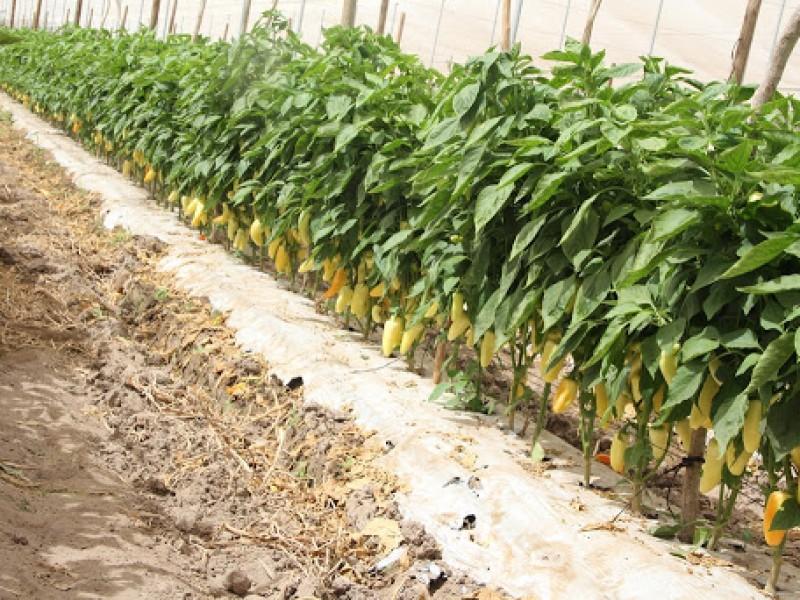 Trabajan especialistas en mitigar efectos de la sequía
