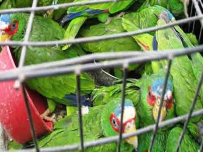Tráfico y venta ilegal de animales persiste