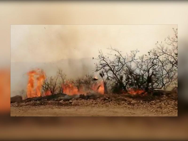 Un muerto y miles de hectáreas siniestradas: Guerrero