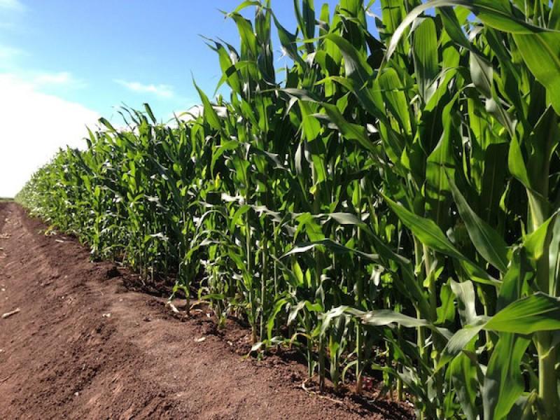 Una aberración desaparecer la Financiera de Desarrollo Rural: Productores Agrícolas