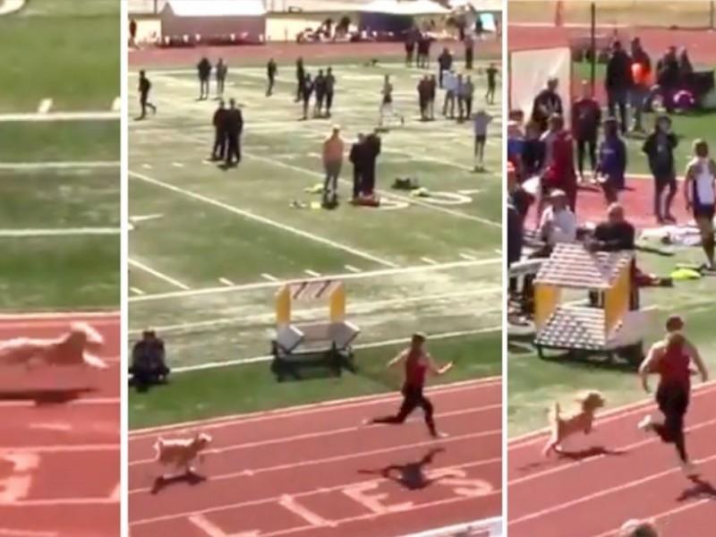 Una perra gana carrera de atletismo en Estados Unidos