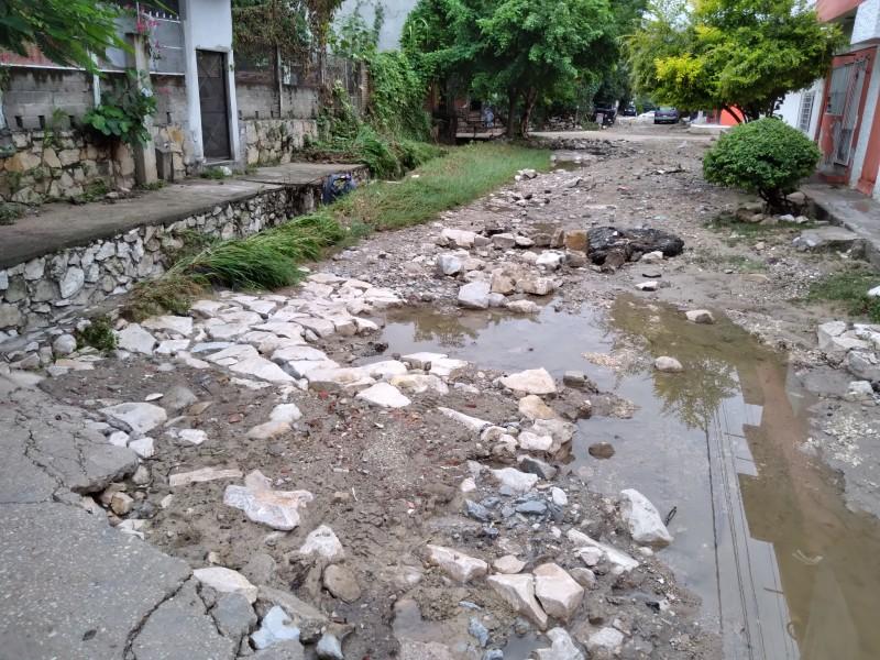 Una persona desaparecida y árboles colapsados saldo de lluvias