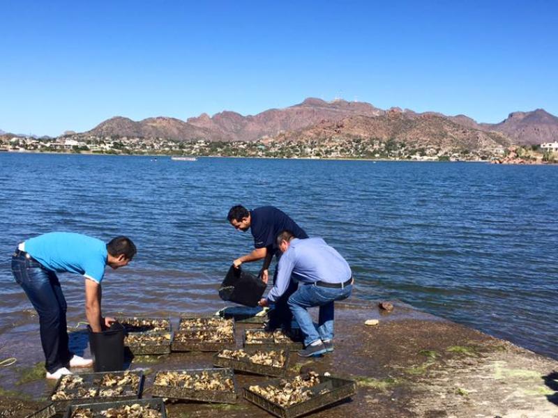 Urge apoyo a actividad acuícola