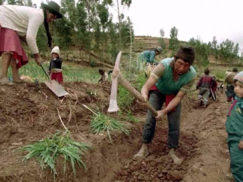 Urge definir programa para reforzar la agricultura