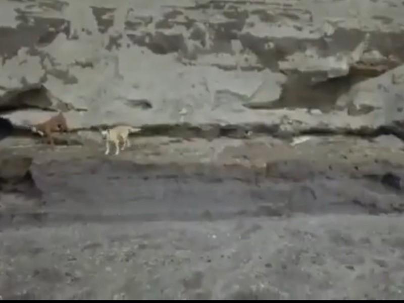 ¡Están vivos! los dos perros que cayeron al socavón