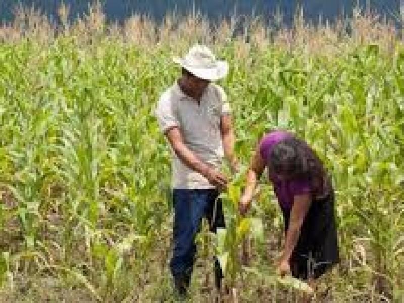 Uso de Agroquímicos genera alta incidencia de cáncer