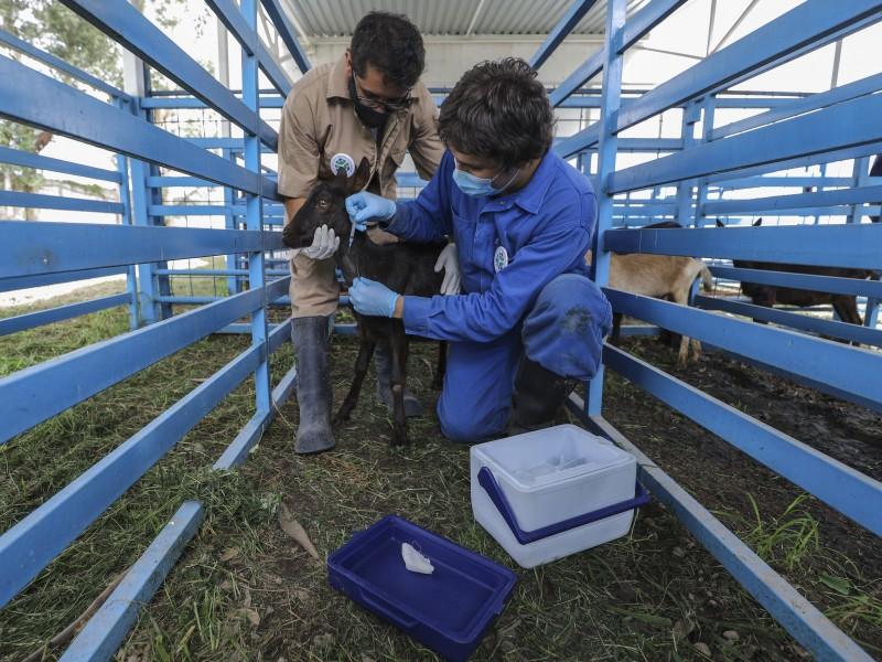Vacuna contra COVID, refleja calidad en la UAQ