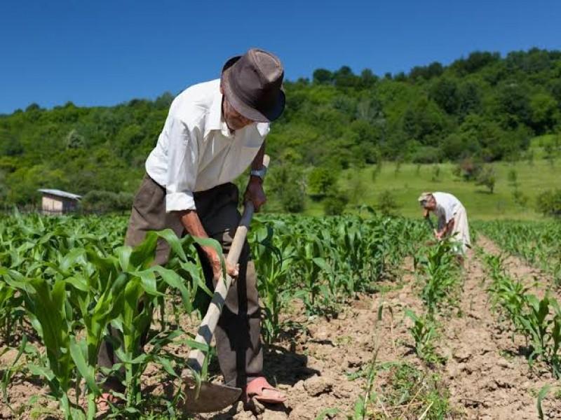 Van 15 años sin censo agropecuario; esperan realizarlo en 2022