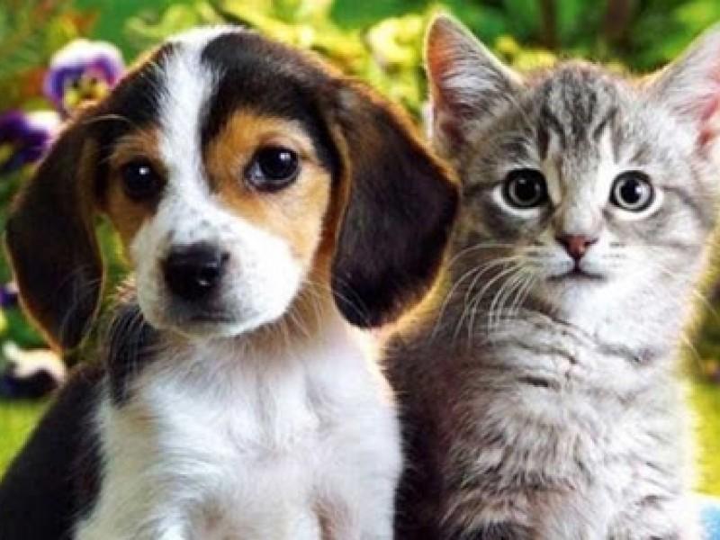 Van 161 animalitos adoptados en la capital este año