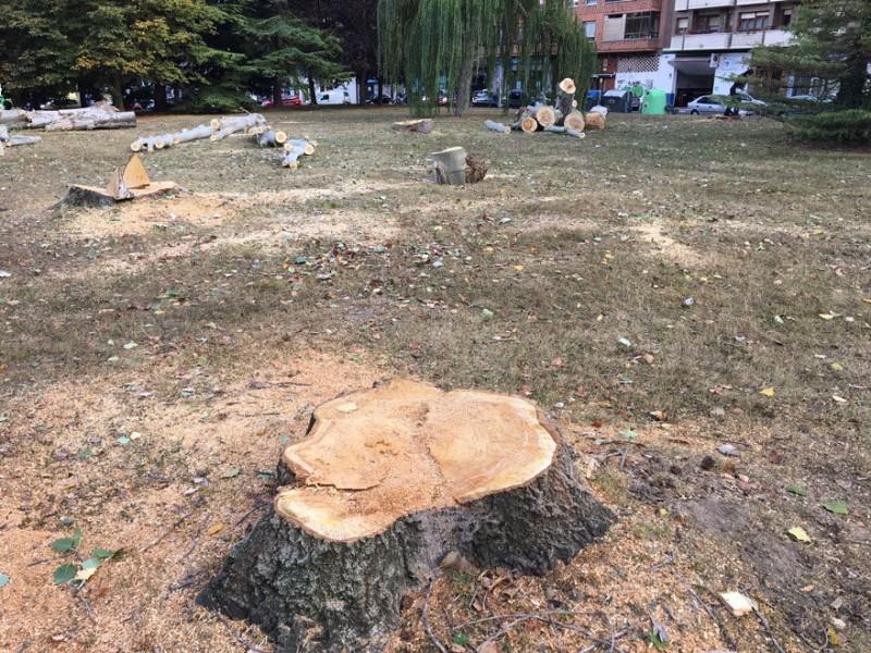 Van seis hermosillenses multados por tala de árboles