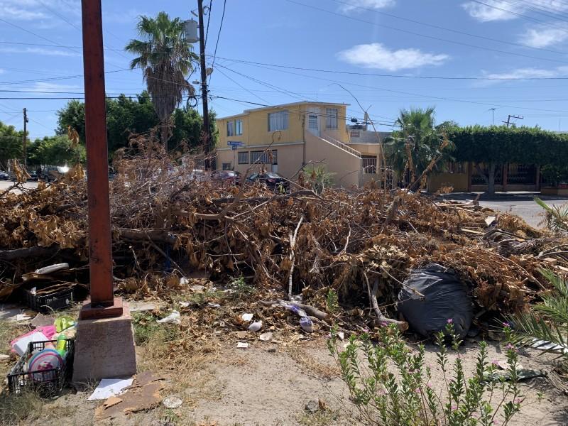 Vecinos de Infonavit denuncian basurero sobre la vía pública