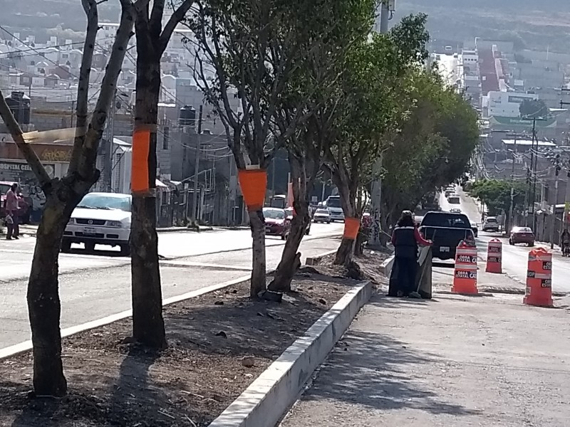 Vecinos defienden árboles en Belén