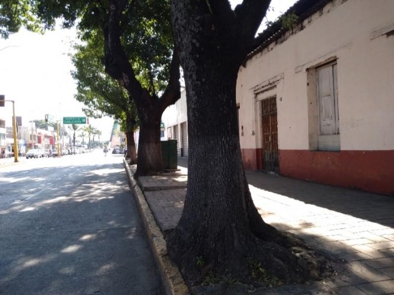 Vecinos denuncian falta de poda de árboles en avenida zamorana