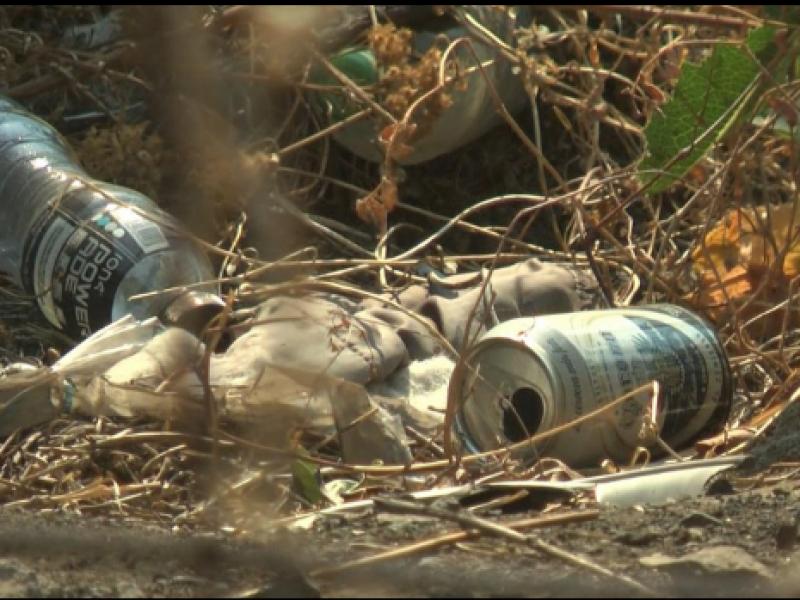 Vecinos exigen limpieza de lote baldío en colonia zamorana