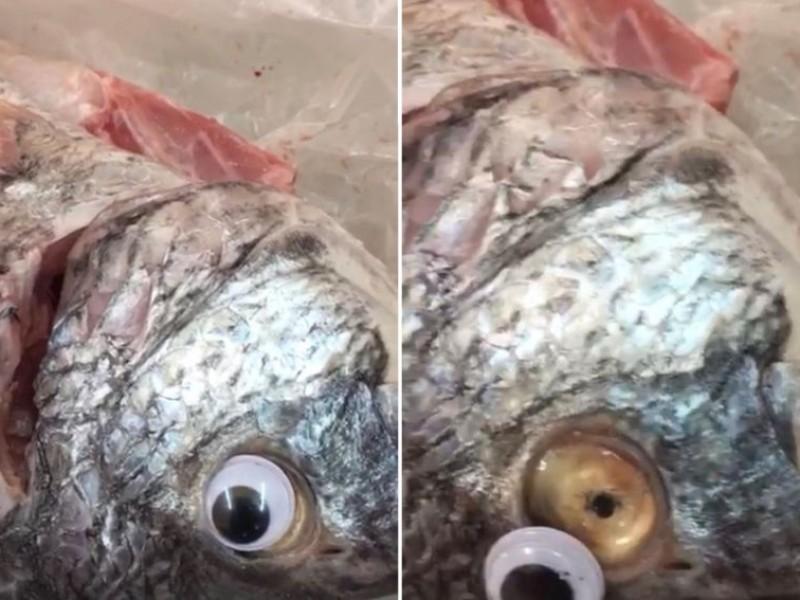 Venden pescado con ojos falsos