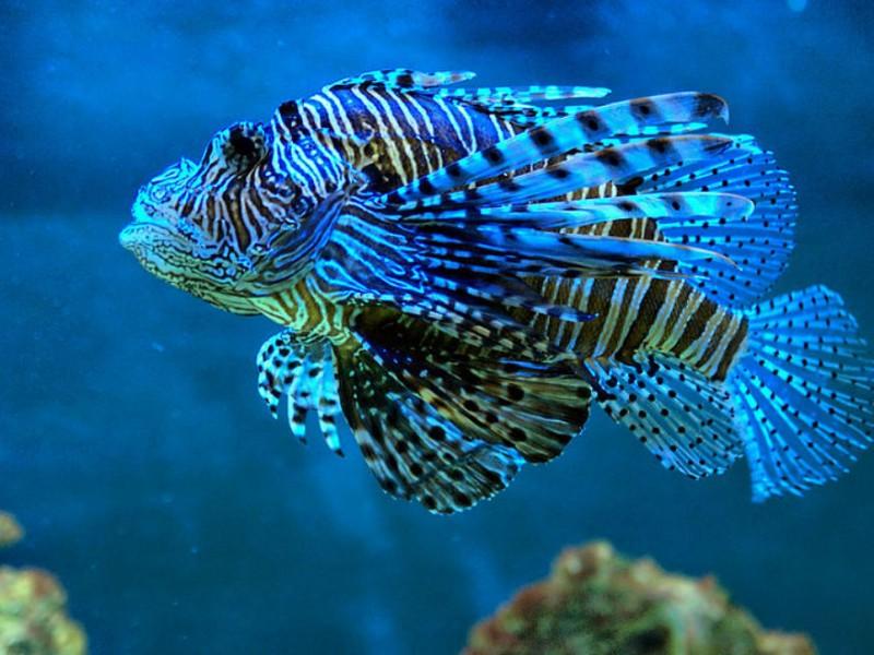 ¿Veneno del pez león sirve para el cáncer?