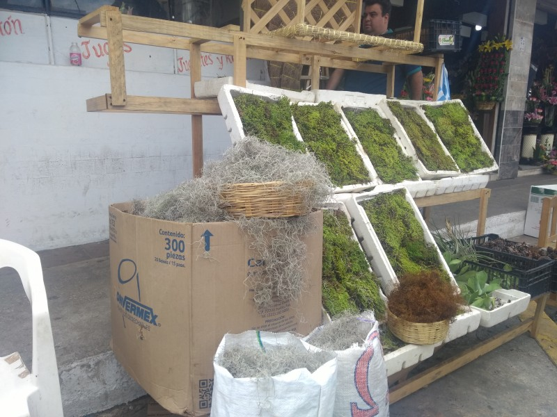 Venta y extracción de musgo ilegal