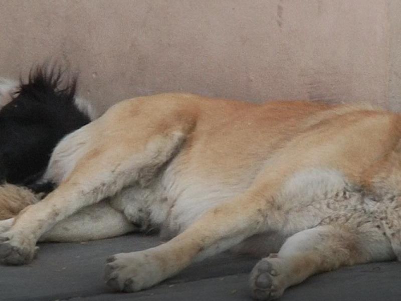 Veterinarios proponen tenencia regulada de mascotas