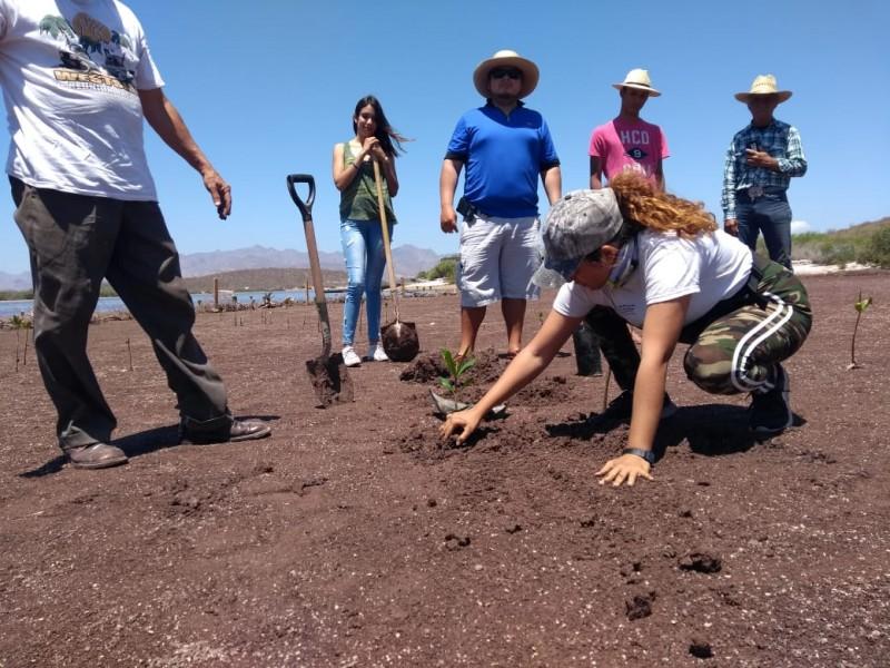 Visitantes siembran mangle en Estero del Soldado