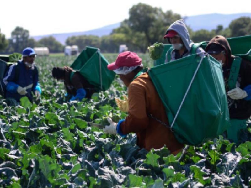 Ya iniciaron lluvias y nunca llegó el fertilizante: productores