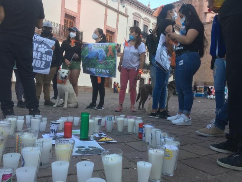 Zacatecanos exigen justicia ante maltrato animal